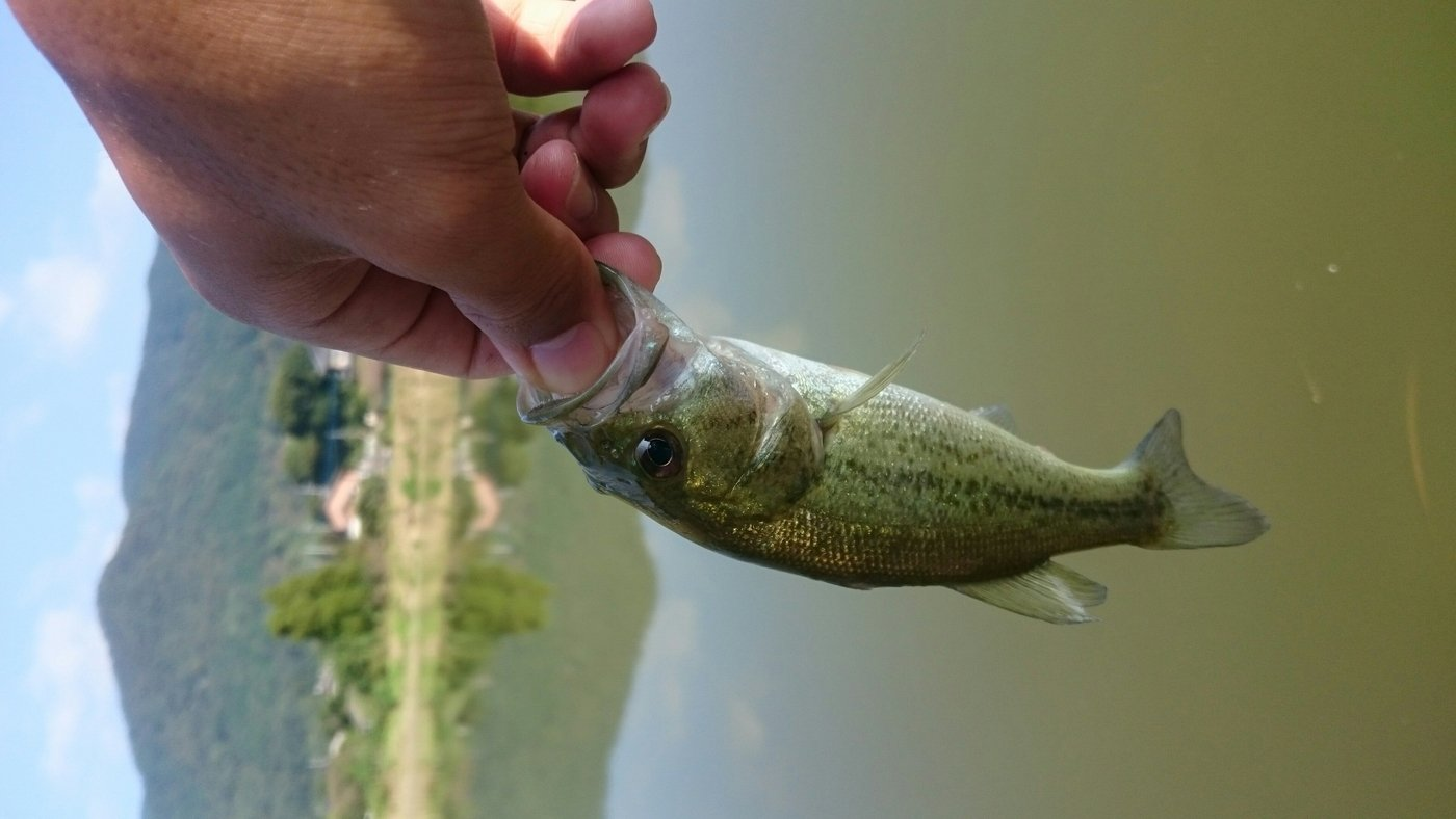 TYさんの投稿画像,写っている魚はブラックバス