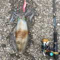 副部長さんの大分県佐伯市での釣果写真