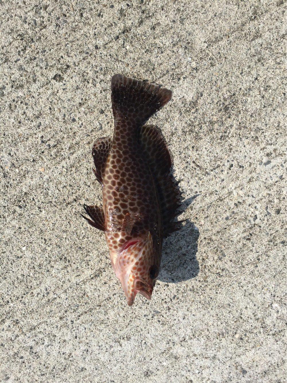 KIさんの投稿画像,写っている魚は