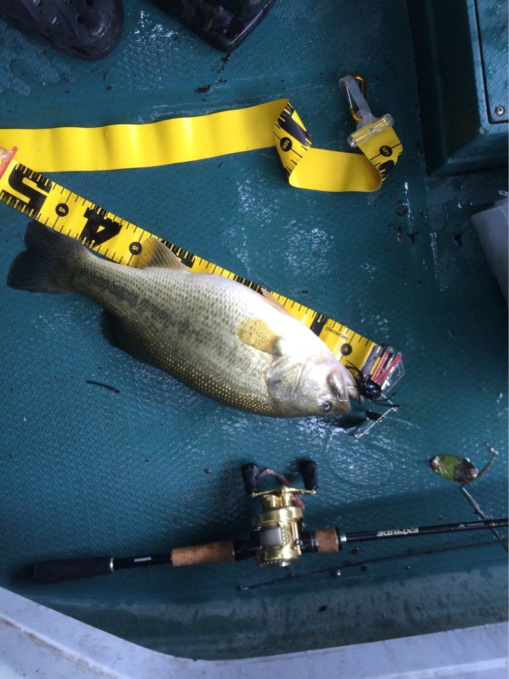 ステラさんの投稿画像,写っている魚はブラックバス