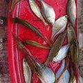 taizoさんのタナゴの釣果写真