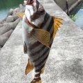 あきわたさんの徳島県海部郡での釣果写真
