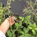 ニゴイさんの千葉県八千代市での釣果写真