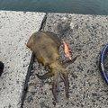 一也さんの山口県下松市での釣果写真
