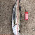 濱松海さんの島根県江津市での釣果写真