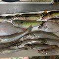 ヨッシーさんの広島県福山市での釣果写真