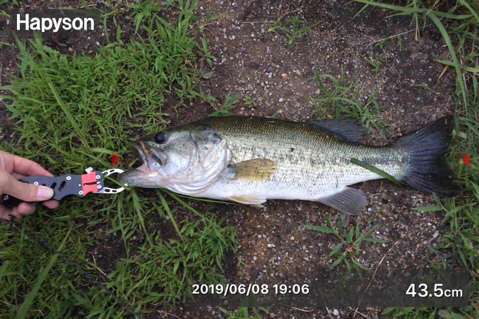 ヒデキさんの投稿画像,写っている魚は,