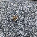 ゆうさんの広島県呉市での釣果写真
