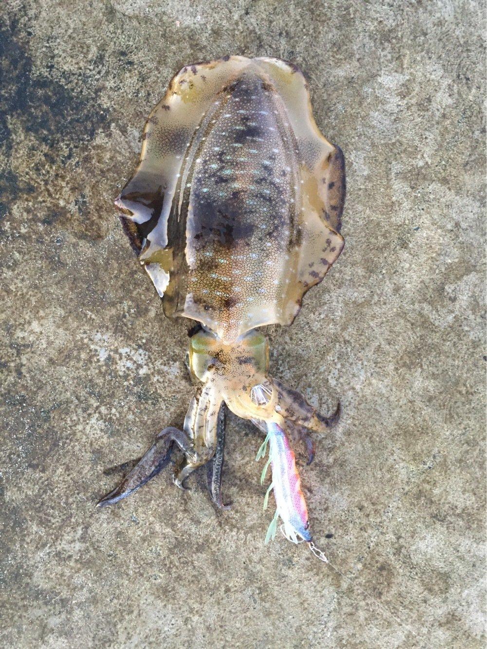 ずんだ餅さんの投稿画像,写っている魚はアオリイカ