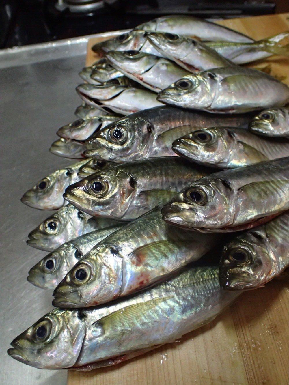 Sacanaさんの投稿画像,写っている魚はアジ