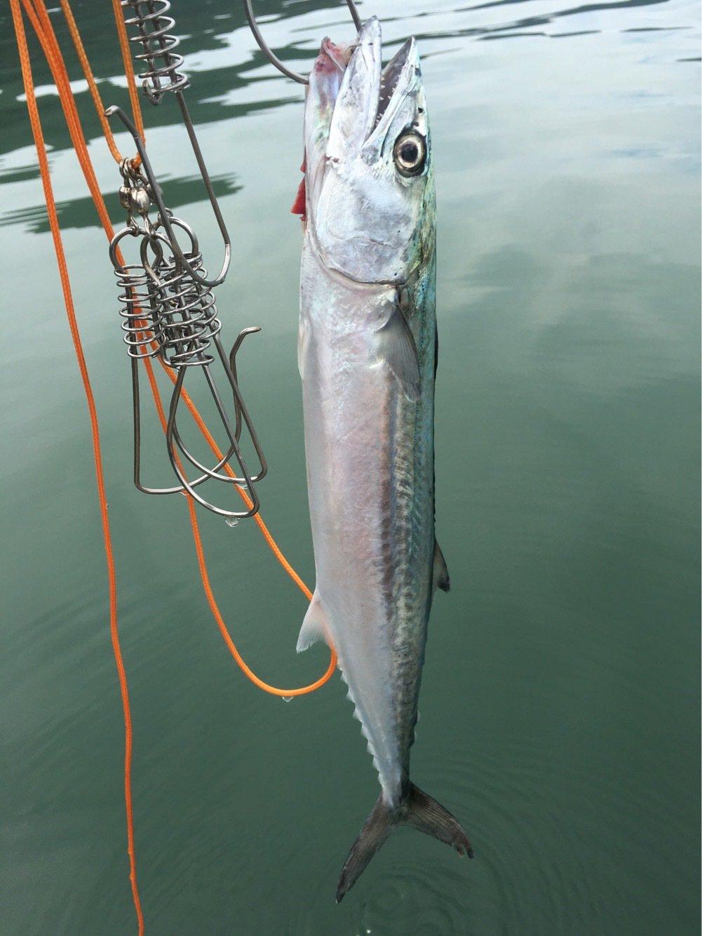 タクヤさんの投稿画像,写っている魚は