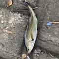 Yohei Hosokawaさんの埼玉県川口市での釣果写真