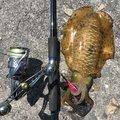 イカさんの山口県熊毛郡での釣果写真