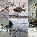 flounderさんのウミタナゴの釣果写真