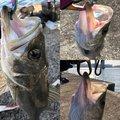 魚紳さんの兵庫県西宮市での釣果写真