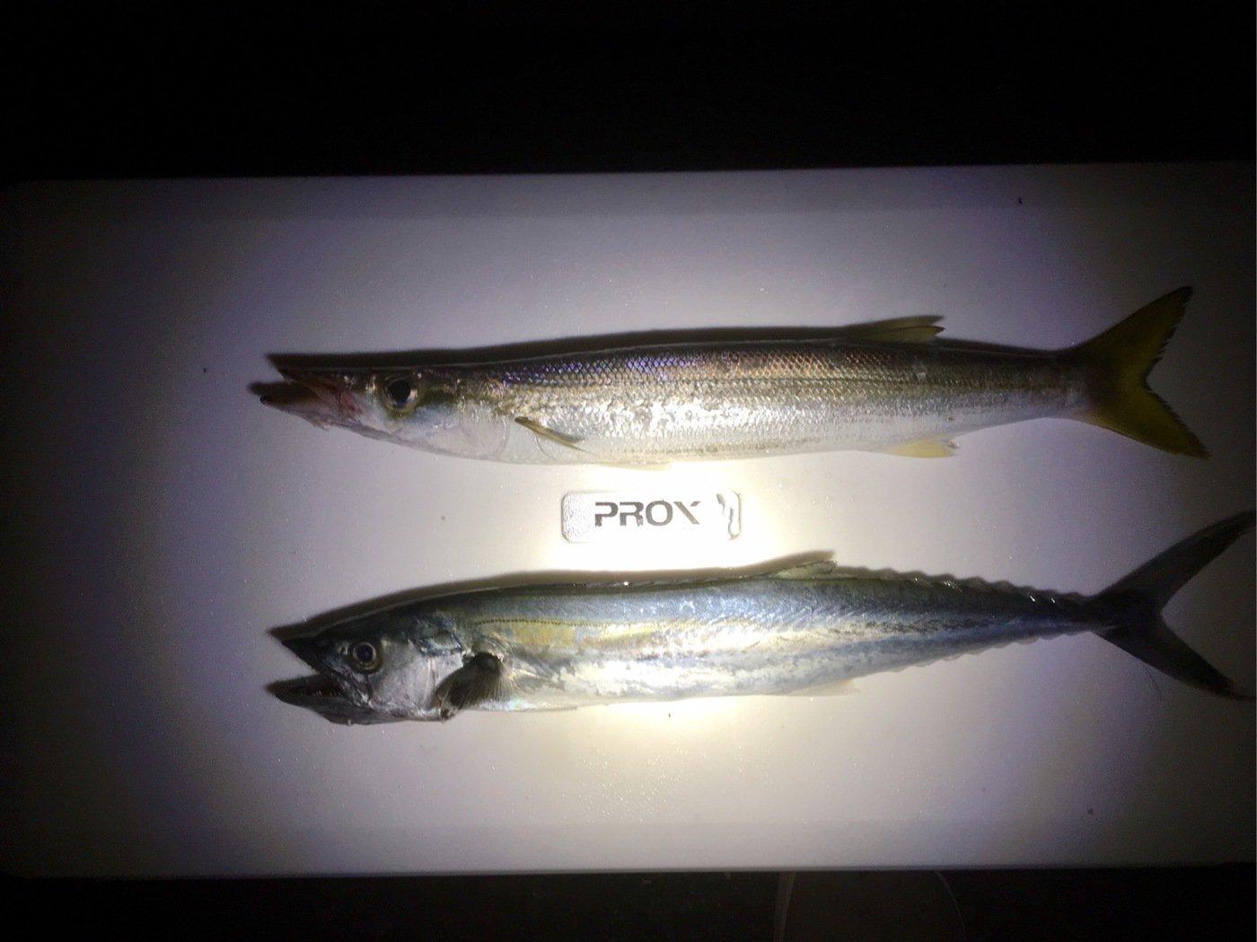 YUUKIさんの投稿画像,写っている魚は