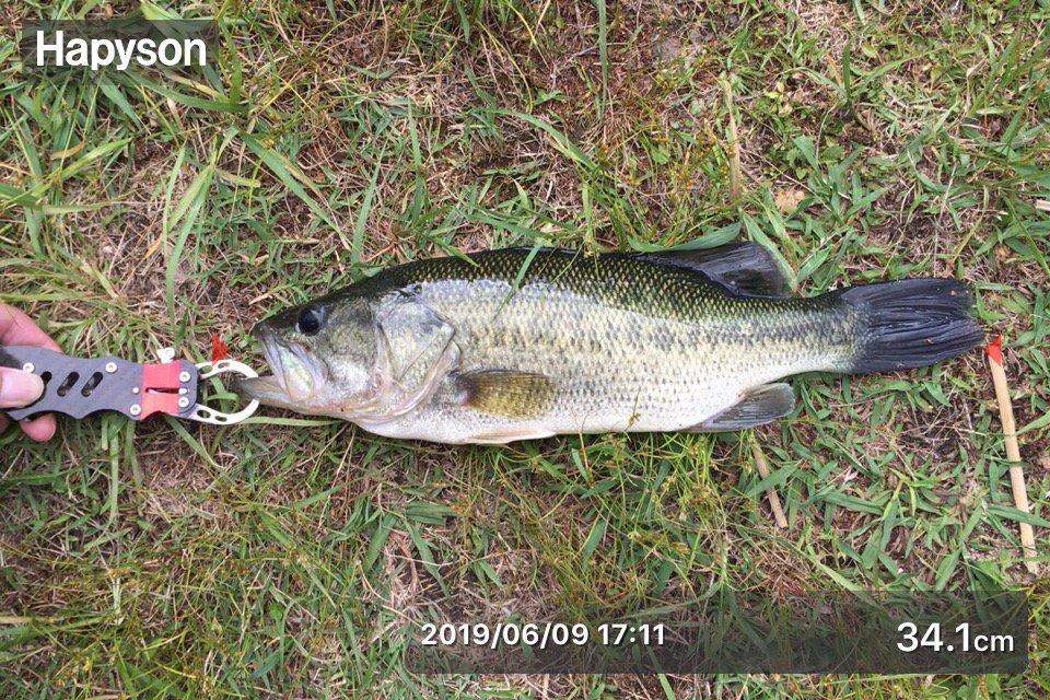 ヒデキさんの投稿画像,写っている魚は