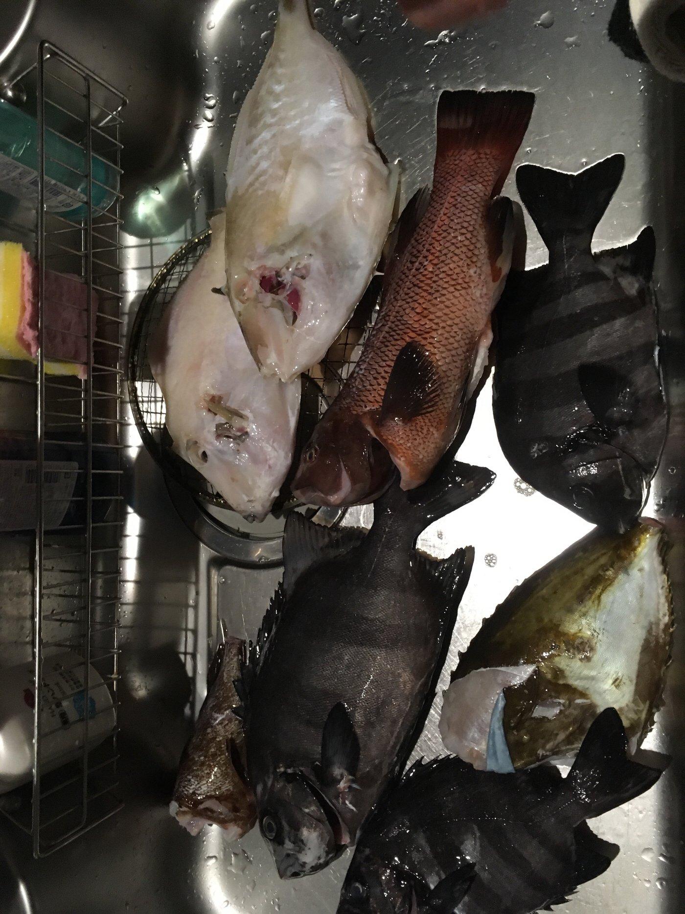 Yanさんの投稿画像,写っている魚はイシダイ,コブダイ,ウマヅラハギ,カワハギ,カサゴ