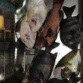 Yanさんの広島県山県郡での釣果写真