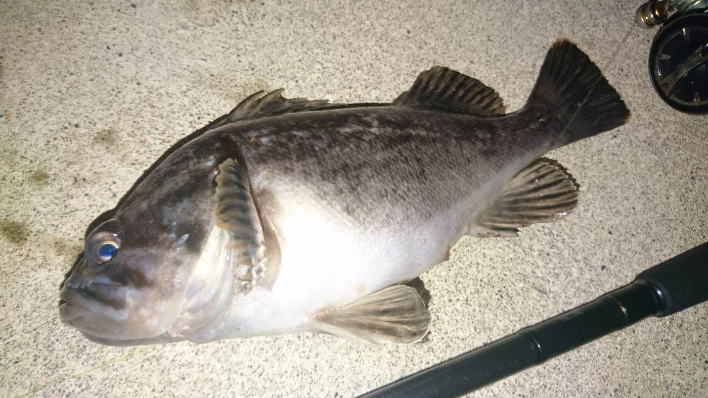 カチュアさんの投稿画像,写っている魚はクロソイ