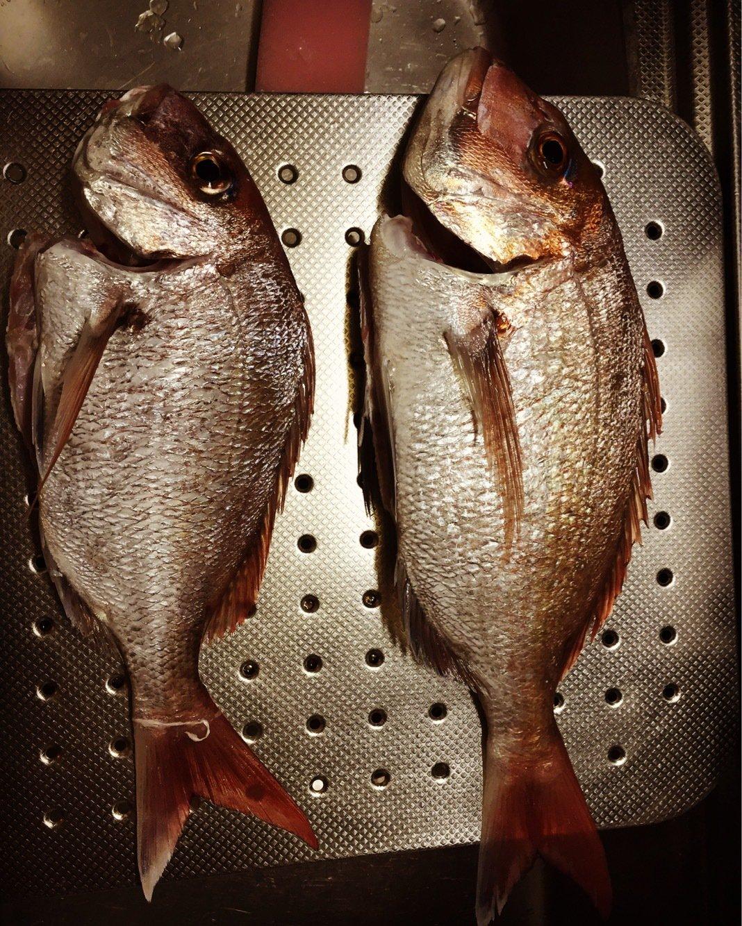 だっちんさんの投稿画像,写っている魚はマダイ