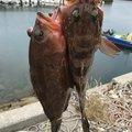 かねさんの岡山県倉敷市での釣果写真