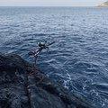 サーーラさんの高知県宿毛市での釣果写真