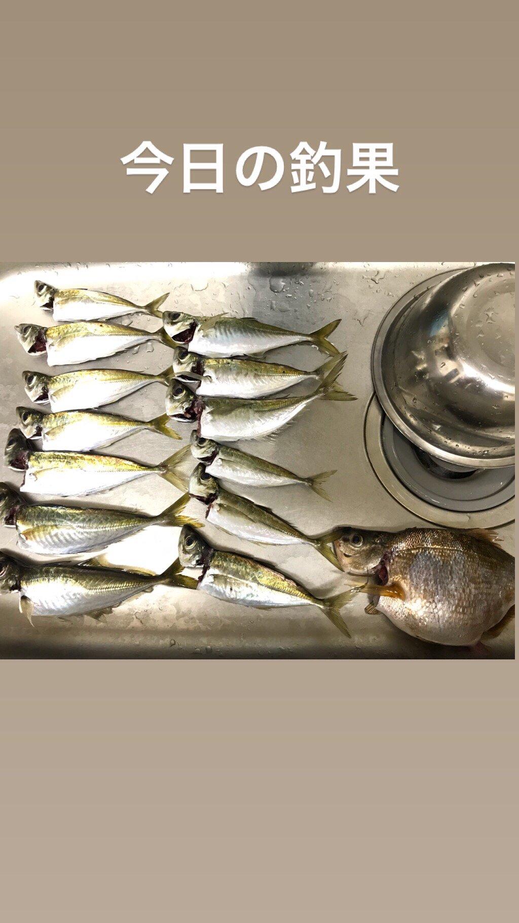 ばやしさんの投稿画像,写っている魚はアジ