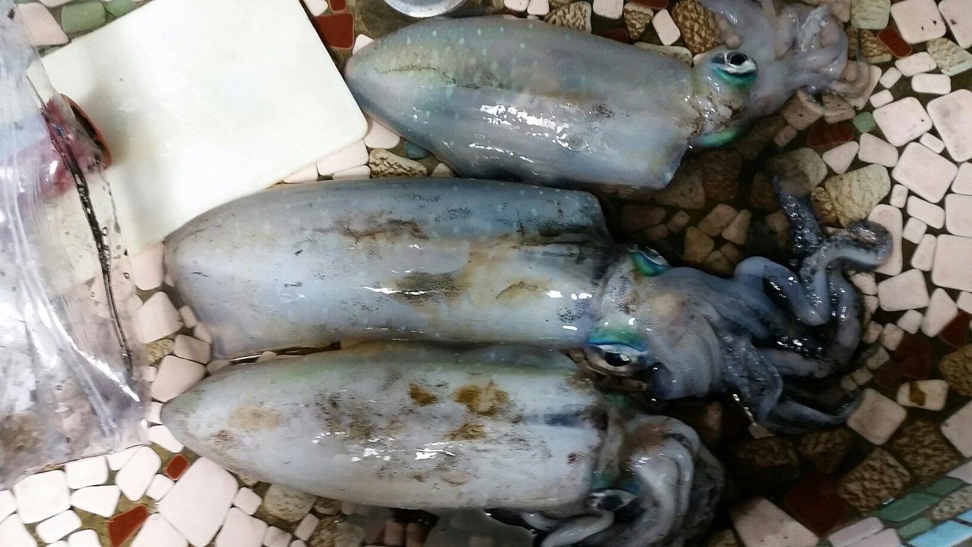 四谷一郎さんの投稿画像,写っている魚はアオリイカ