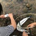 ばやしさんの長崎県大村市での釣果写真