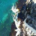 ムァラユさんのワラサの釣果写真