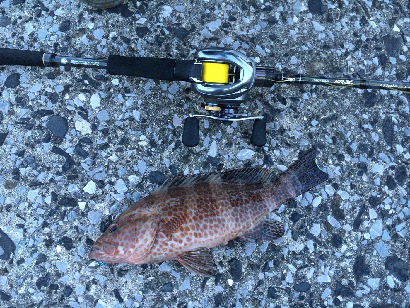 HIDEKIさんの投稿画像,写っている魚はオオモンハタ