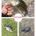えびちゃん❗️さんの兵庫県三田市での釣果写真