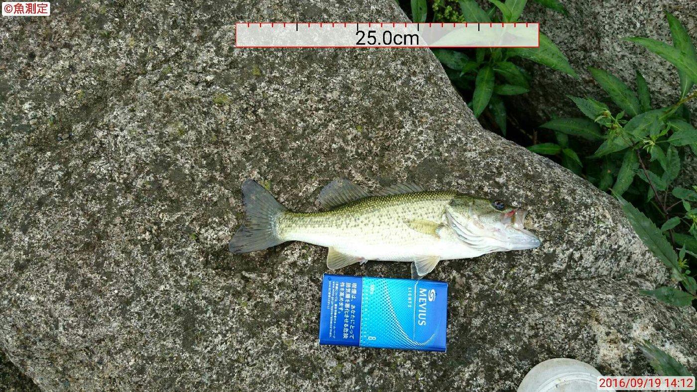 釣りの助さんの投稿画像,写っている魚はブラックバス