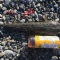 ヒラメちゃんさんの静岡県でのコチの釣果写真