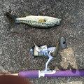Rariryu さんの滋賀県草津市での釣果写真