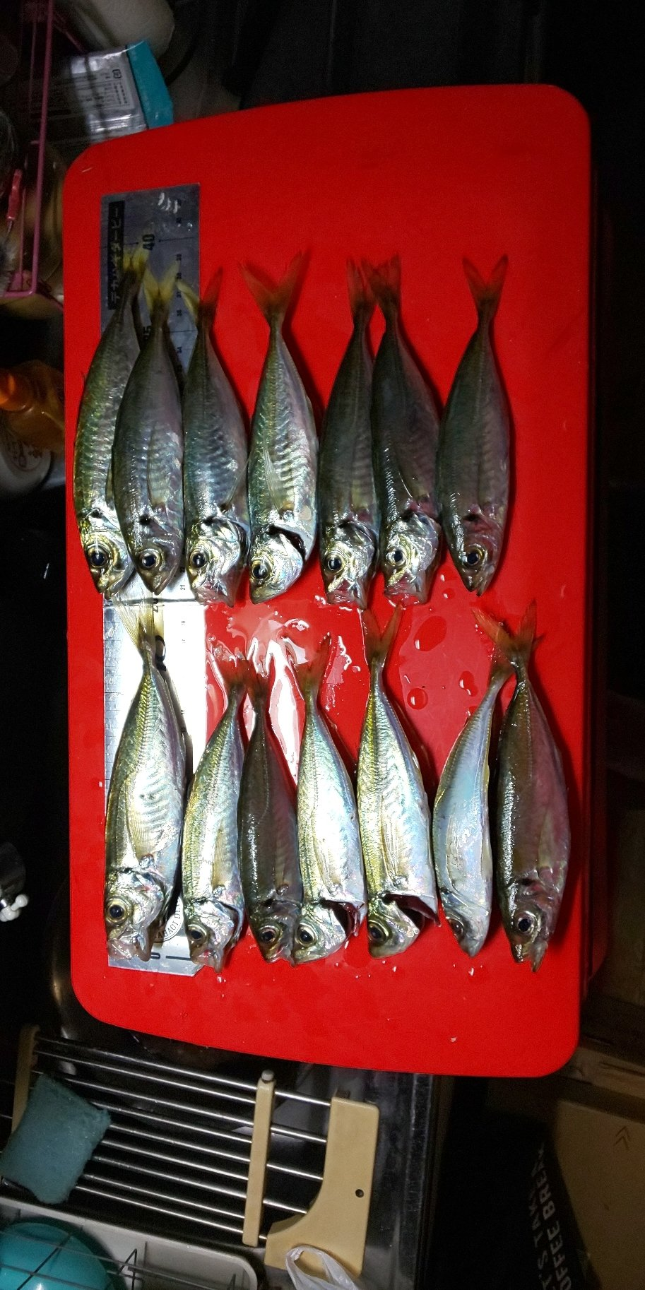 森山昇さんの投稿画像,写っている魚はアジ