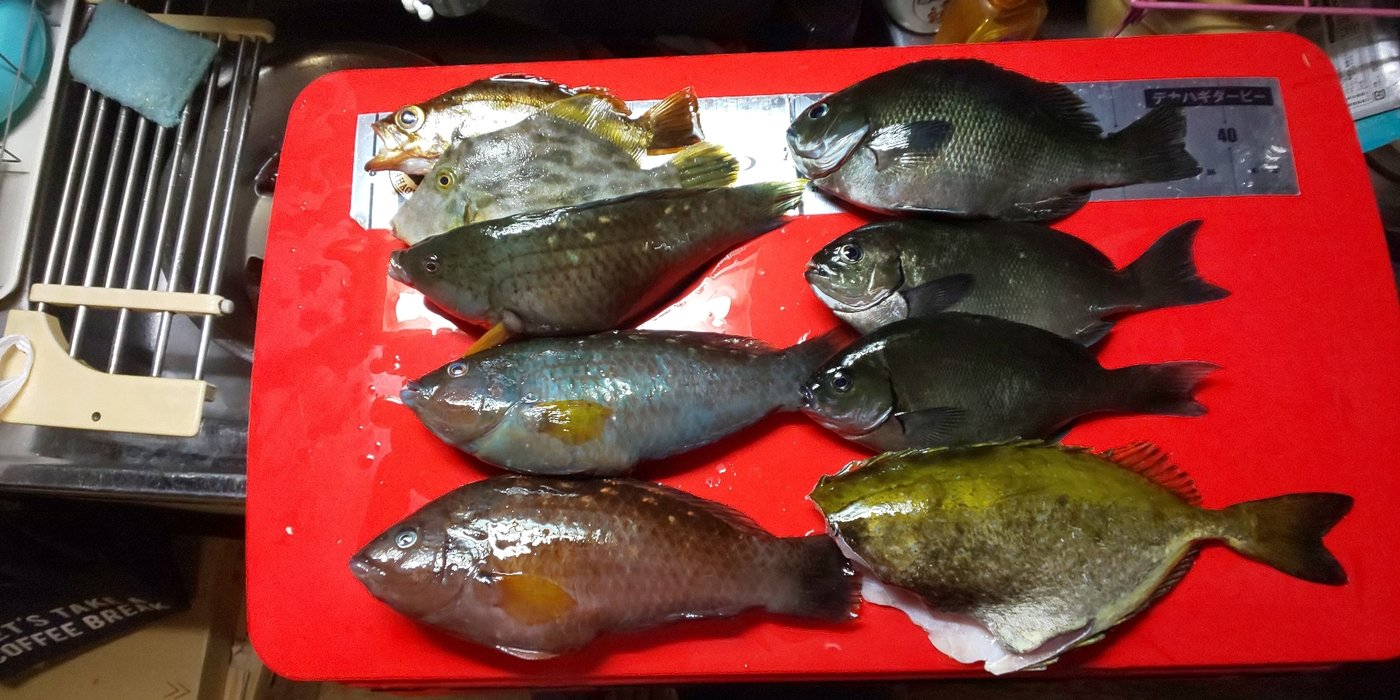 森山昇さんの投稿画像,写っている魚は,キュウセン