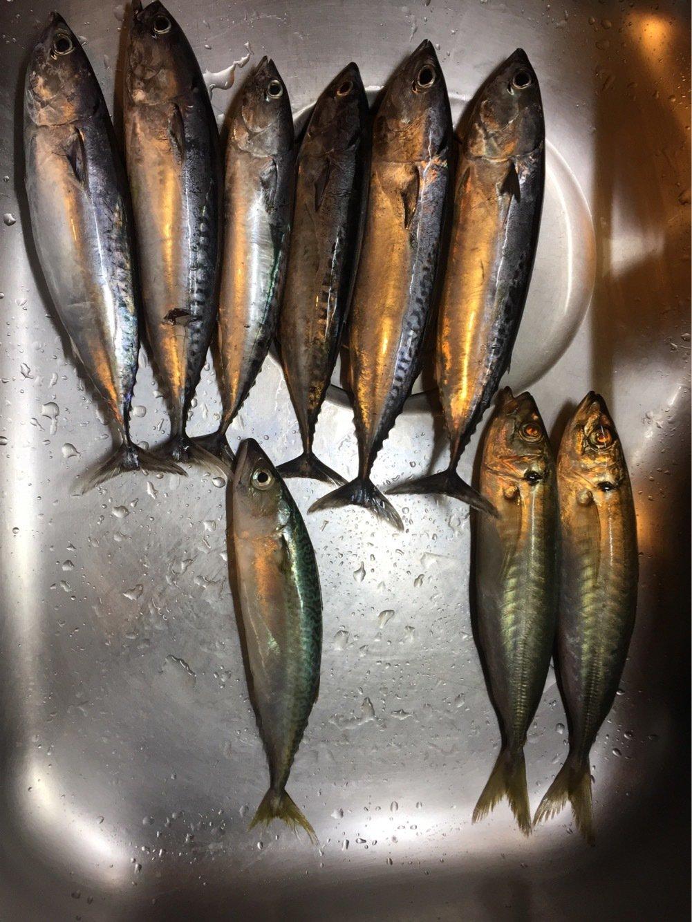 こしさんの投稿画像,写っている魚はアジ