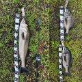 たけぞーさんの静岡県富士市での釣果写真