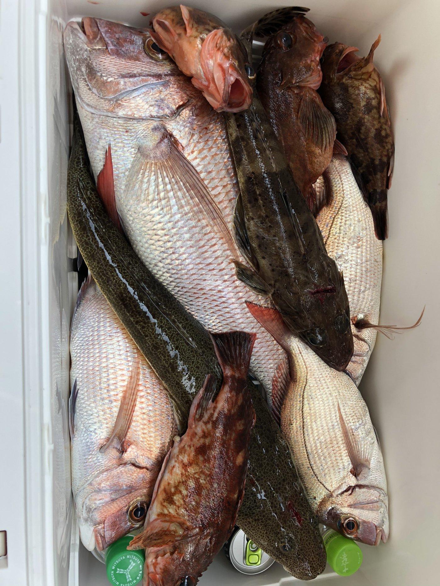 ケンジさんの投稿画像,写っている魚はマダイ,コチ,カサゴ