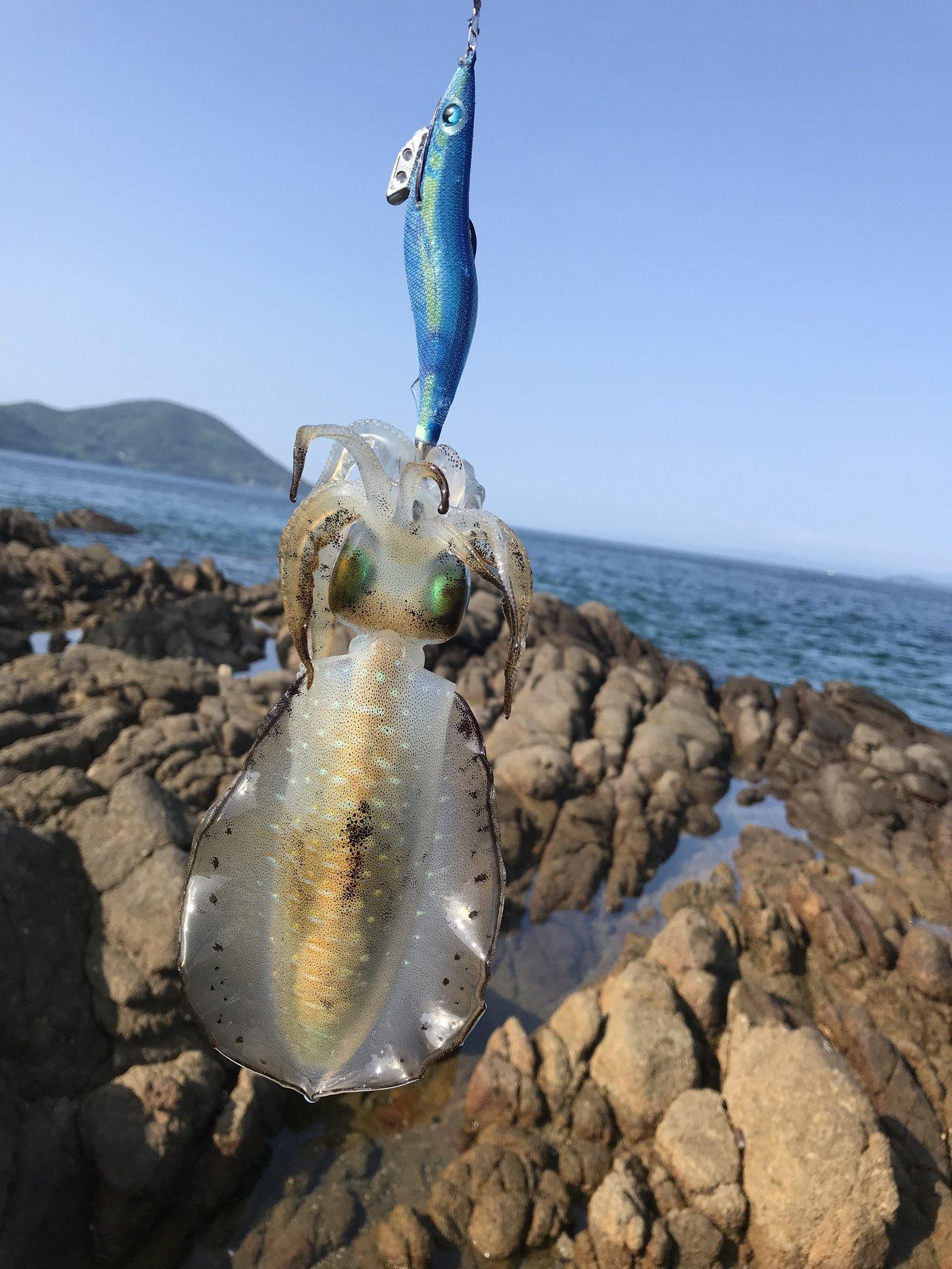 あいすさんの投稿画像,写っている魚はアオリイカ