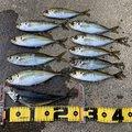 のり夫さんの新潟県柏崎市での釣果写真