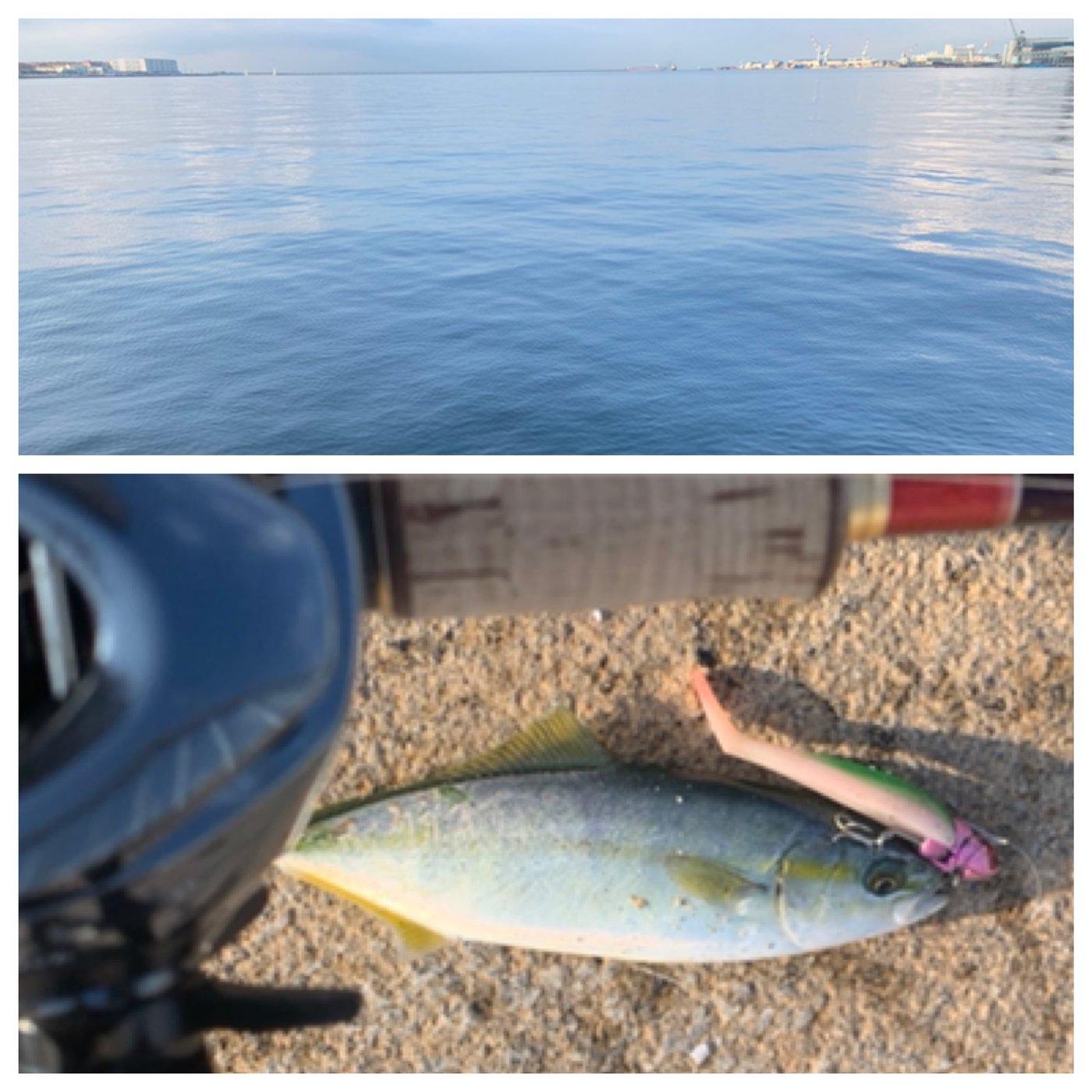 ととのすけさんの投稿画像,写っている魚はブリ