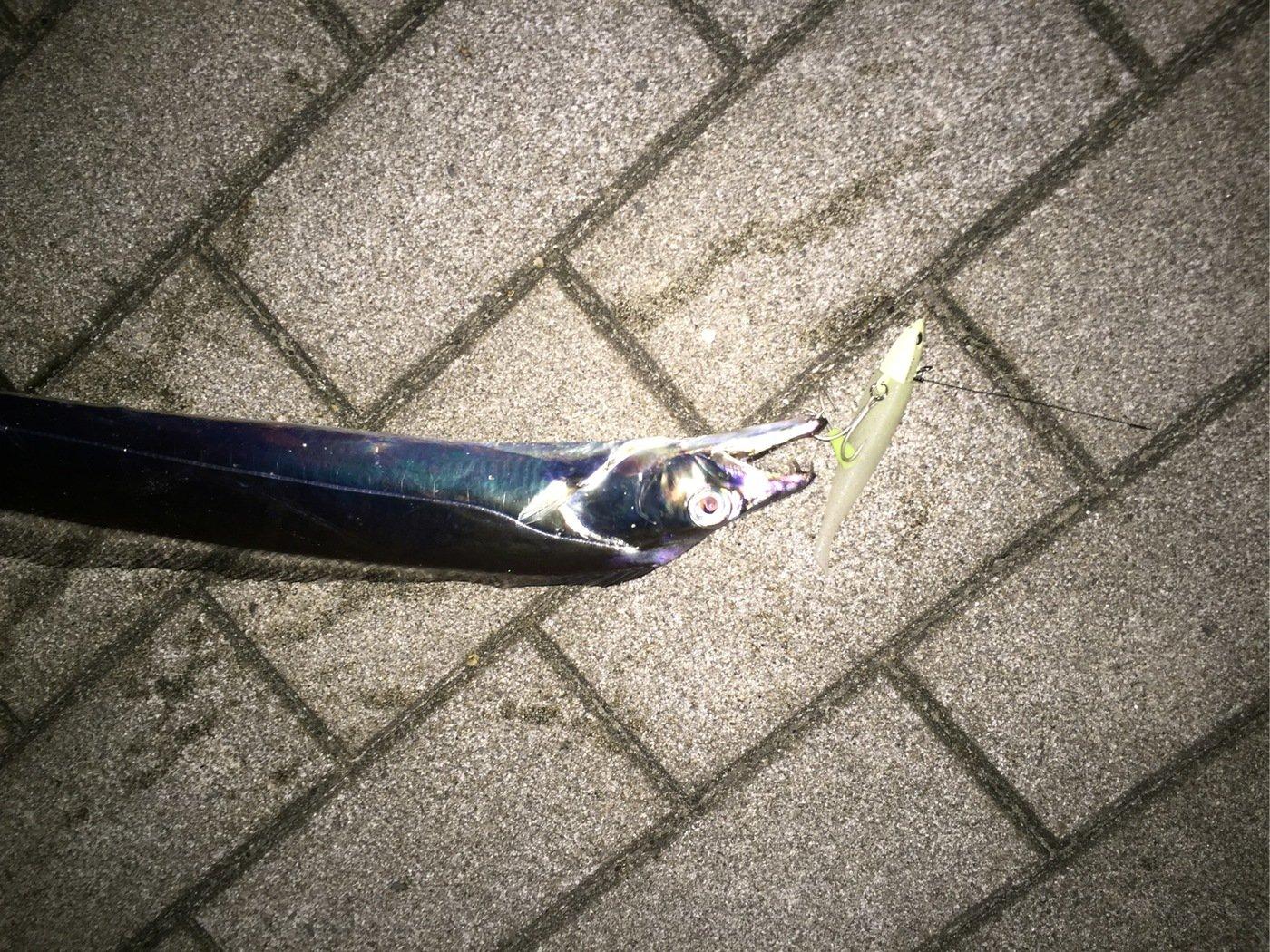 とーしろーさんの投稿画像,写っている魚はタチウオ