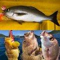 け〜たゴリラさんの鹿児島県南さつま市でのイサキの釣果写真