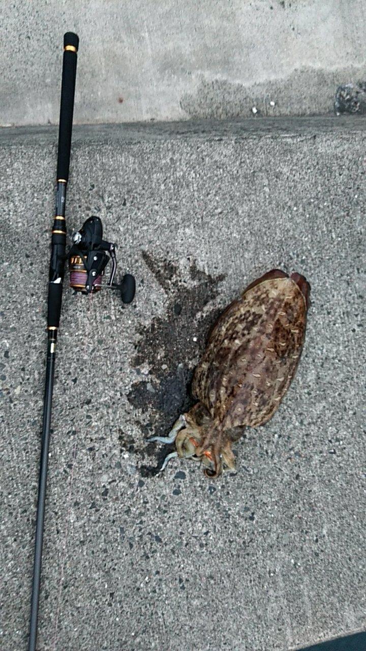 りゅーまさんの投稿画像,写っている魚は