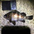 カルロスさんの福井県敦賀市での釣果写真