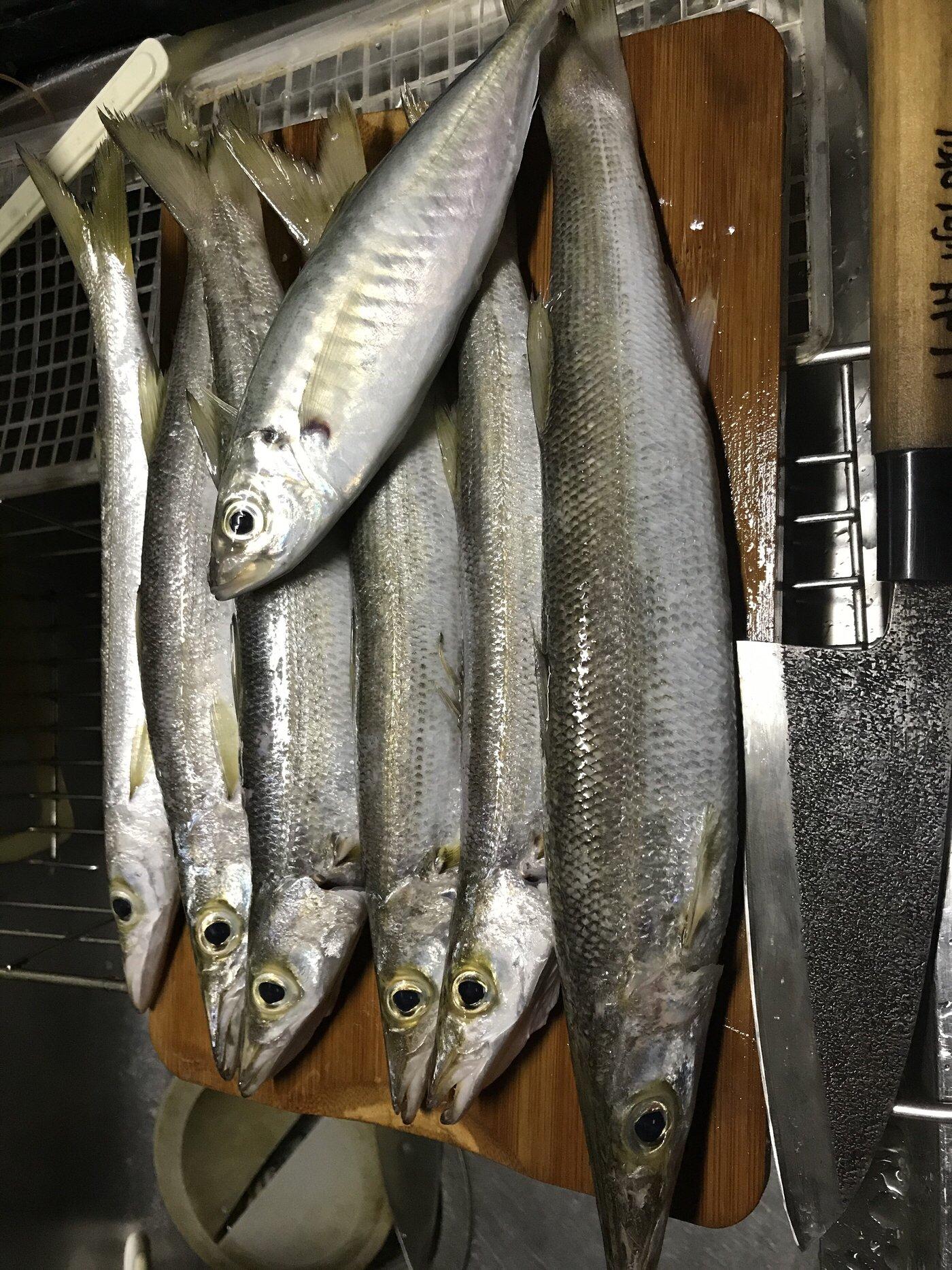 BK翔さんの投稿画像,写っている魚はカマス,アジ,カサゴ,キジハタ