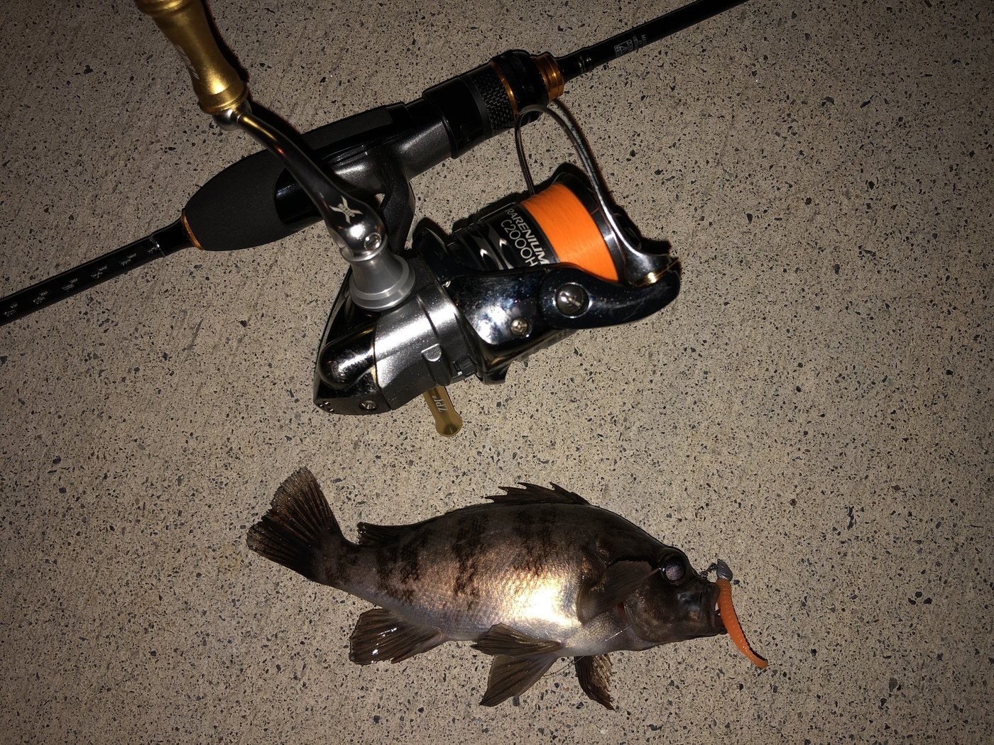 百姓漁師さんの投稿画像,写っている魚はメバル